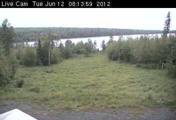Moose photo 1