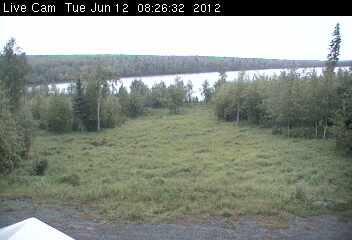 Moose photo 2