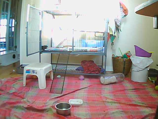 Ferrets photo 2